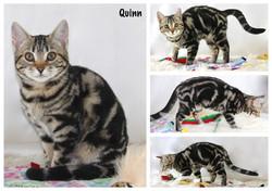 Quinn 16 weeks