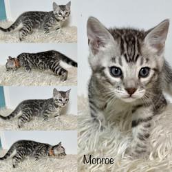 Monroe 6 weeks