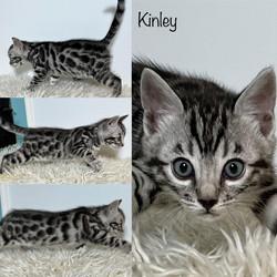 Kinley 6 weeks