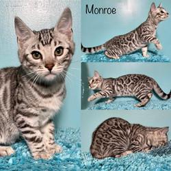 Monroe 12 weeks