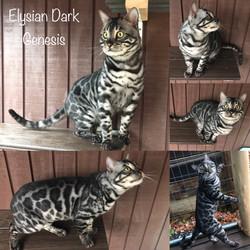 Elysian Dark Genesis