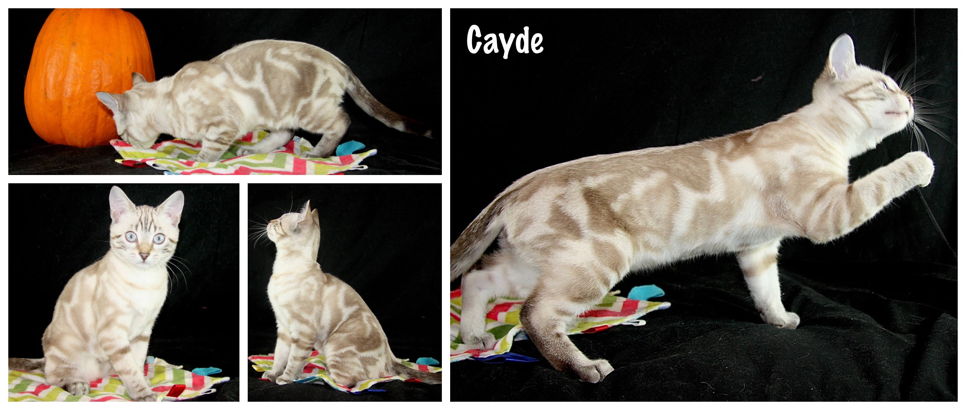Cayde 14 weeks