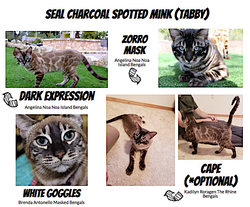 Elysian Bengals Charcoal Reference Guide 4