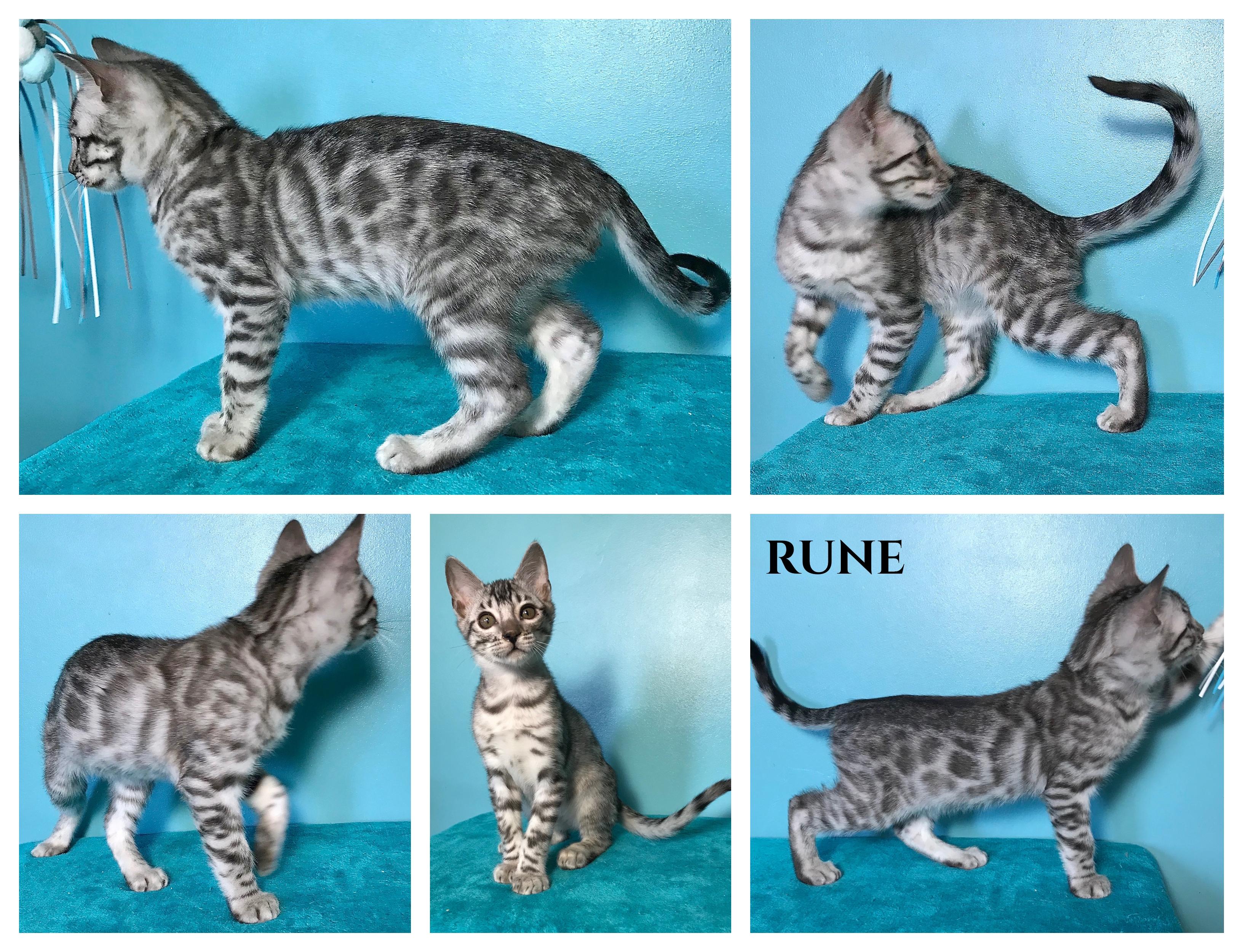 Rune 10 weeks