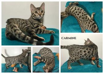 Carmine 19 weeks.jpg