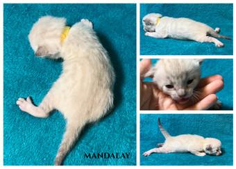 Mandalay 2 weeks.jpg