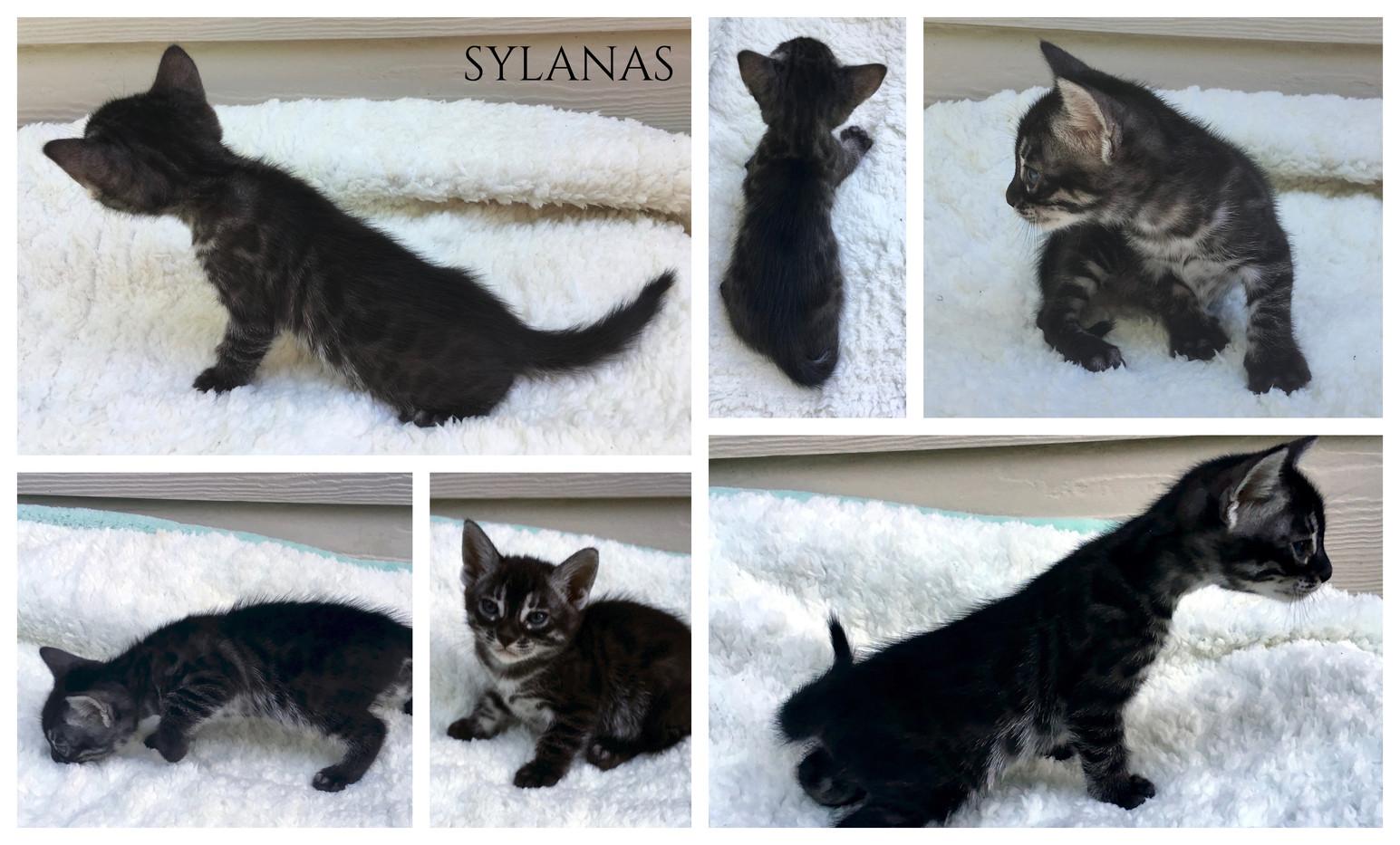 Sylanas 5 weeks.jpg