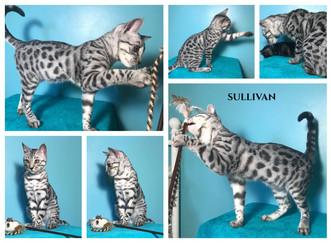 Sullivan 23 weeks.jpg