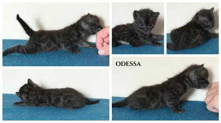 Odessa 3 weeks.jpg