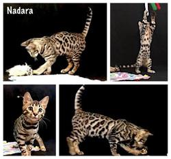 Nadara 14 weeks