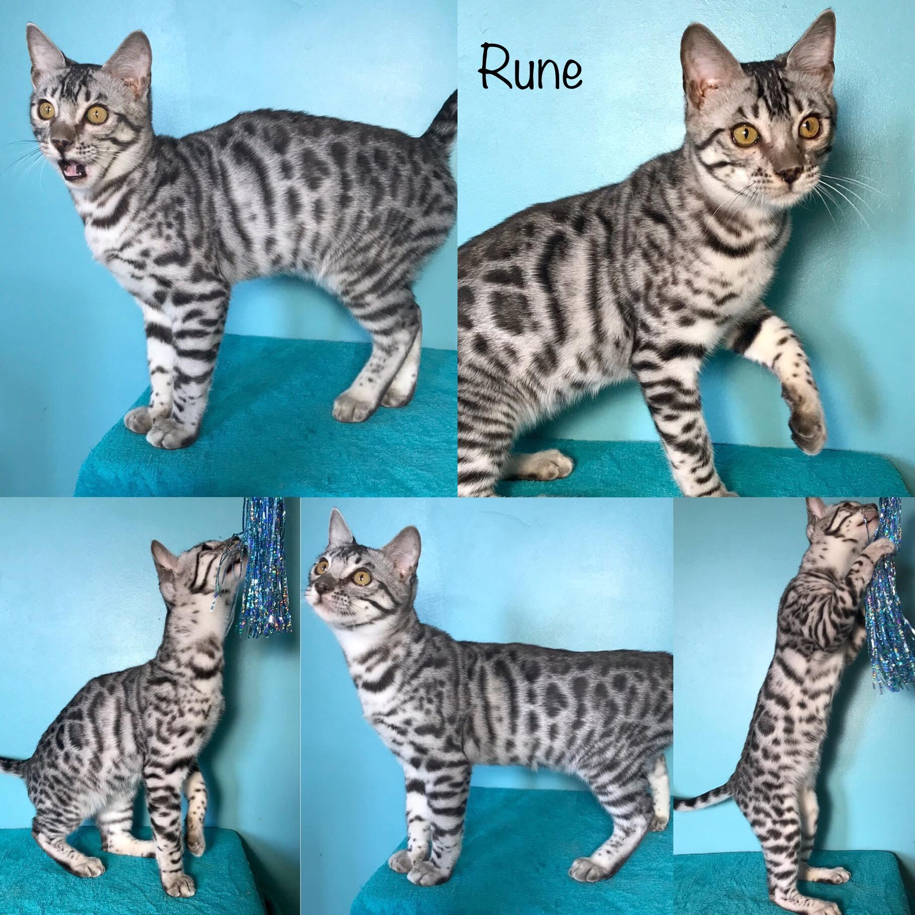 Rune 21 weeks