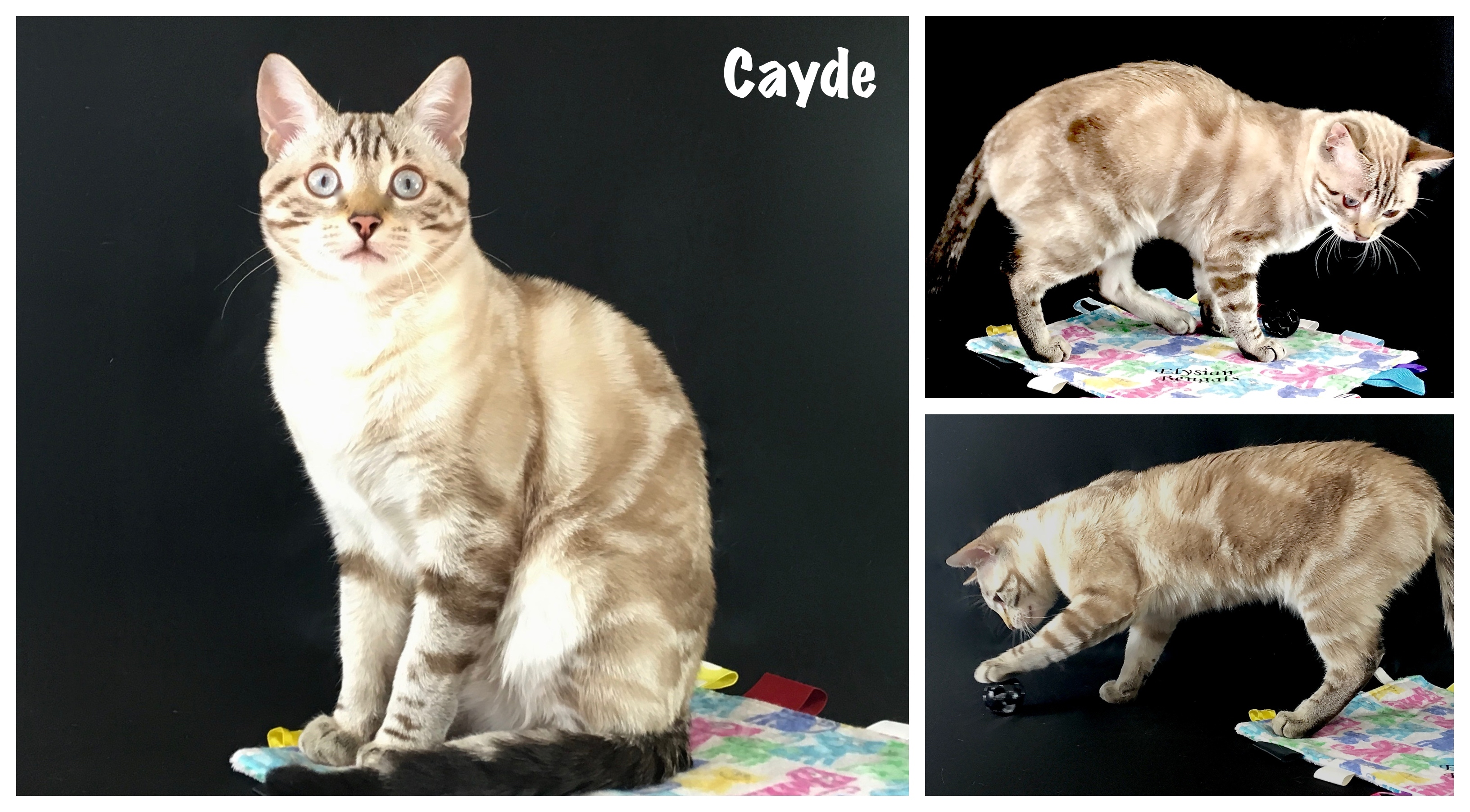 Cayde 23 weeks