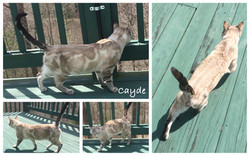 Cayde 32 weeks