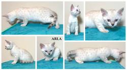 Arla 7 weeks