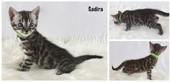 Sadira 4 weeks
