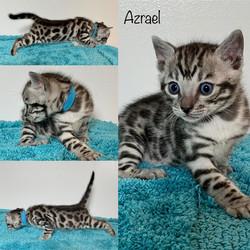 Azrael 4 weeks