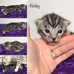 Kinley 2 weeks