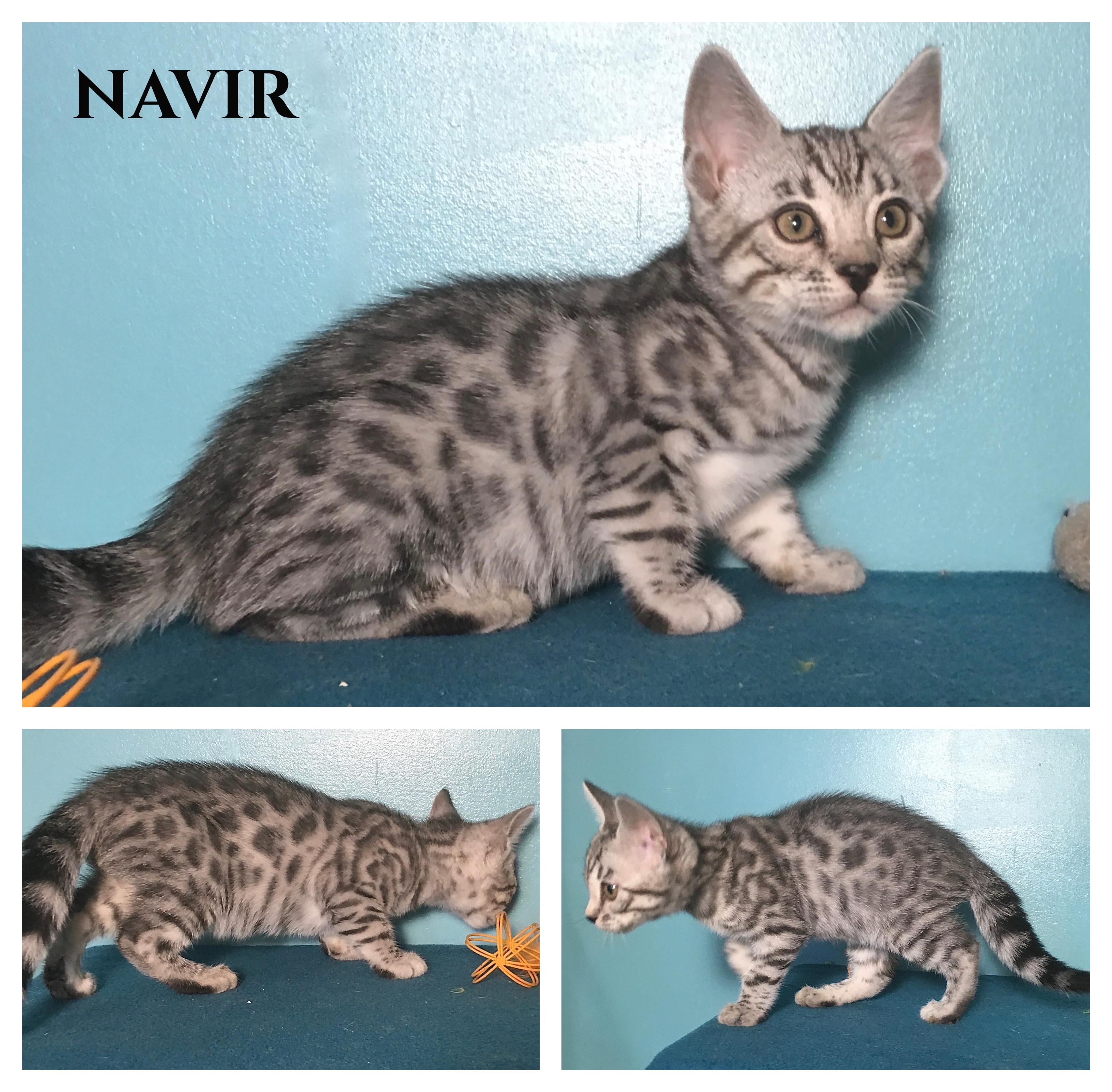 Navir 9 weeks
