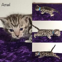 Azrael 3 weeks