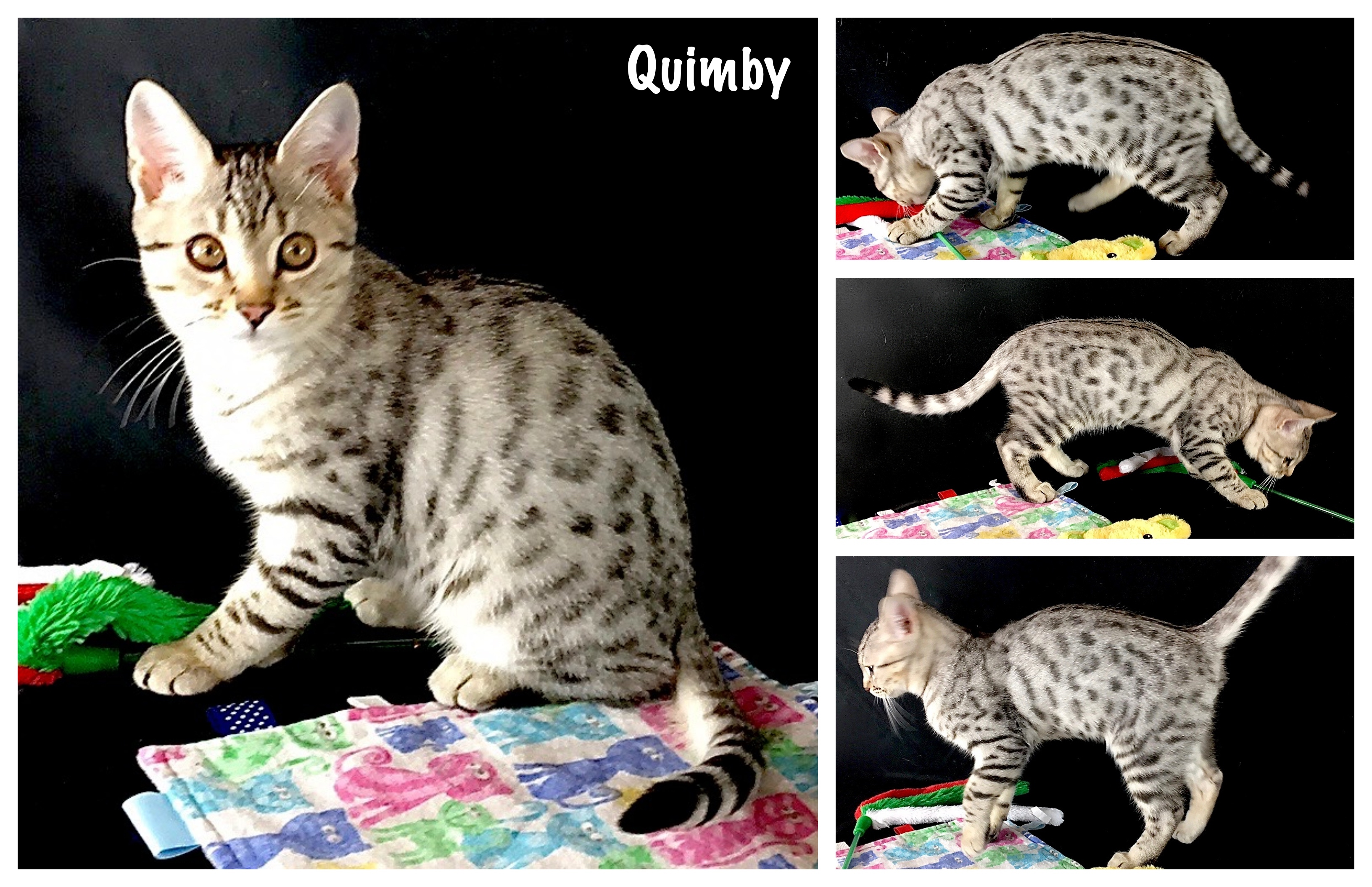 Quimby 17 weeks