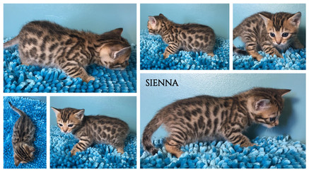 Sienna 4 weeks.jpg