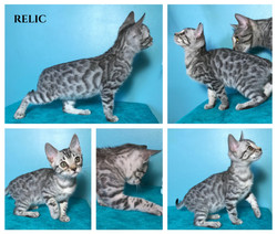 Relic 10 weeks