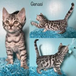 Genasi 9 weeks