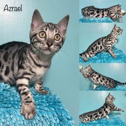 Azrael 15 weeks