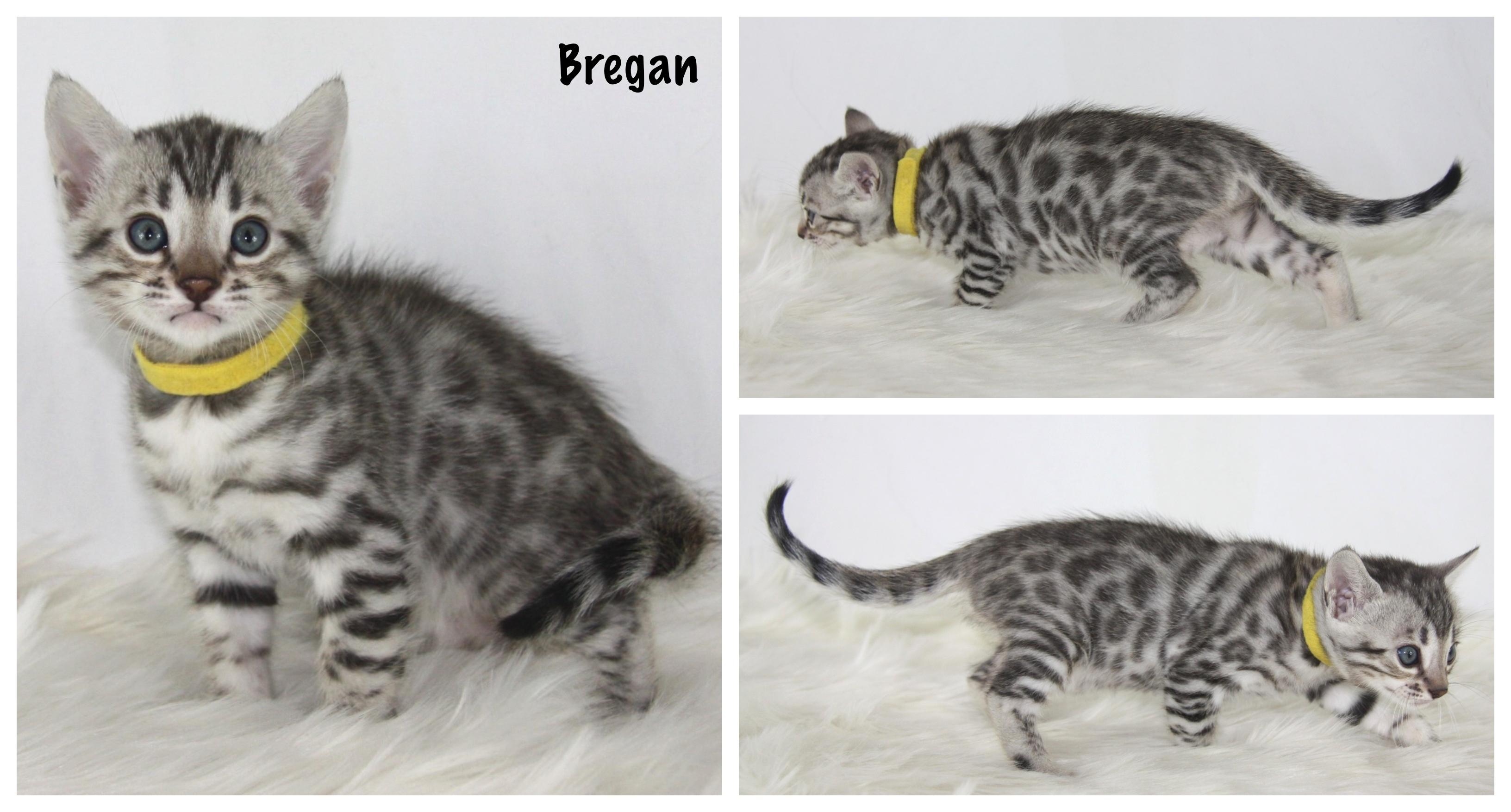 Bregan 5 weeks