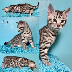 Cain 8 weeks