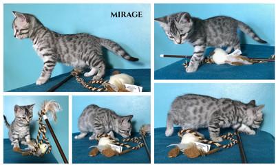 Mirage 7 weeks.jpg