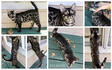 Sylanas 23 weeks.jpg