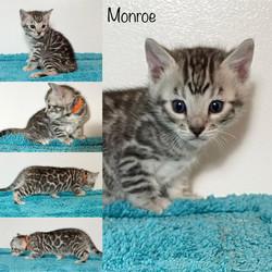 Monroe 4 weeks