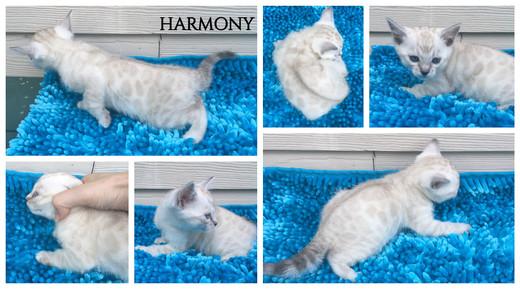 Harmony 5 weeks.jpg