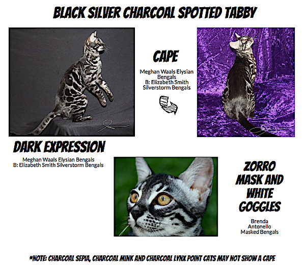 Elysian Bengals Charcoal Reference Guide