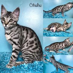 Cthulhu 14 weeks