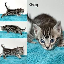 Kinley 4 weeks