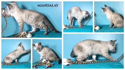 Mandalay 9 weeks.jpg