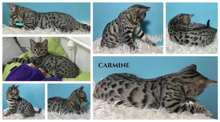 Carmine 15 weeks.jpg