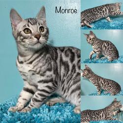 Monroe 15 weeks
