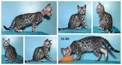 Suri 11 weeks