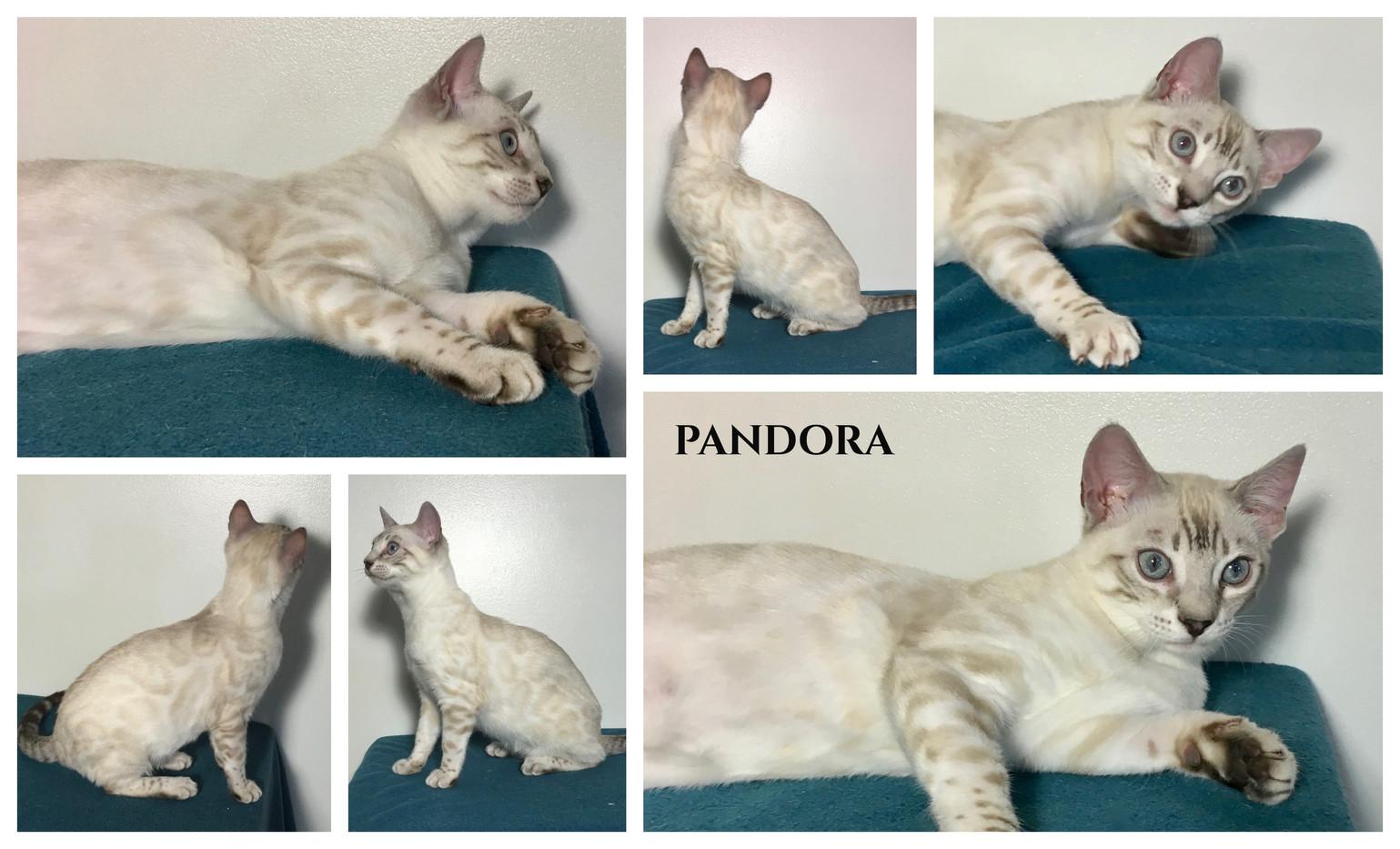 Pandora 21 weeks.jpg