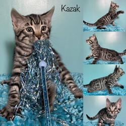 Kazak 10 weeks