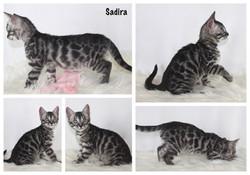 Sadira 8 weeks