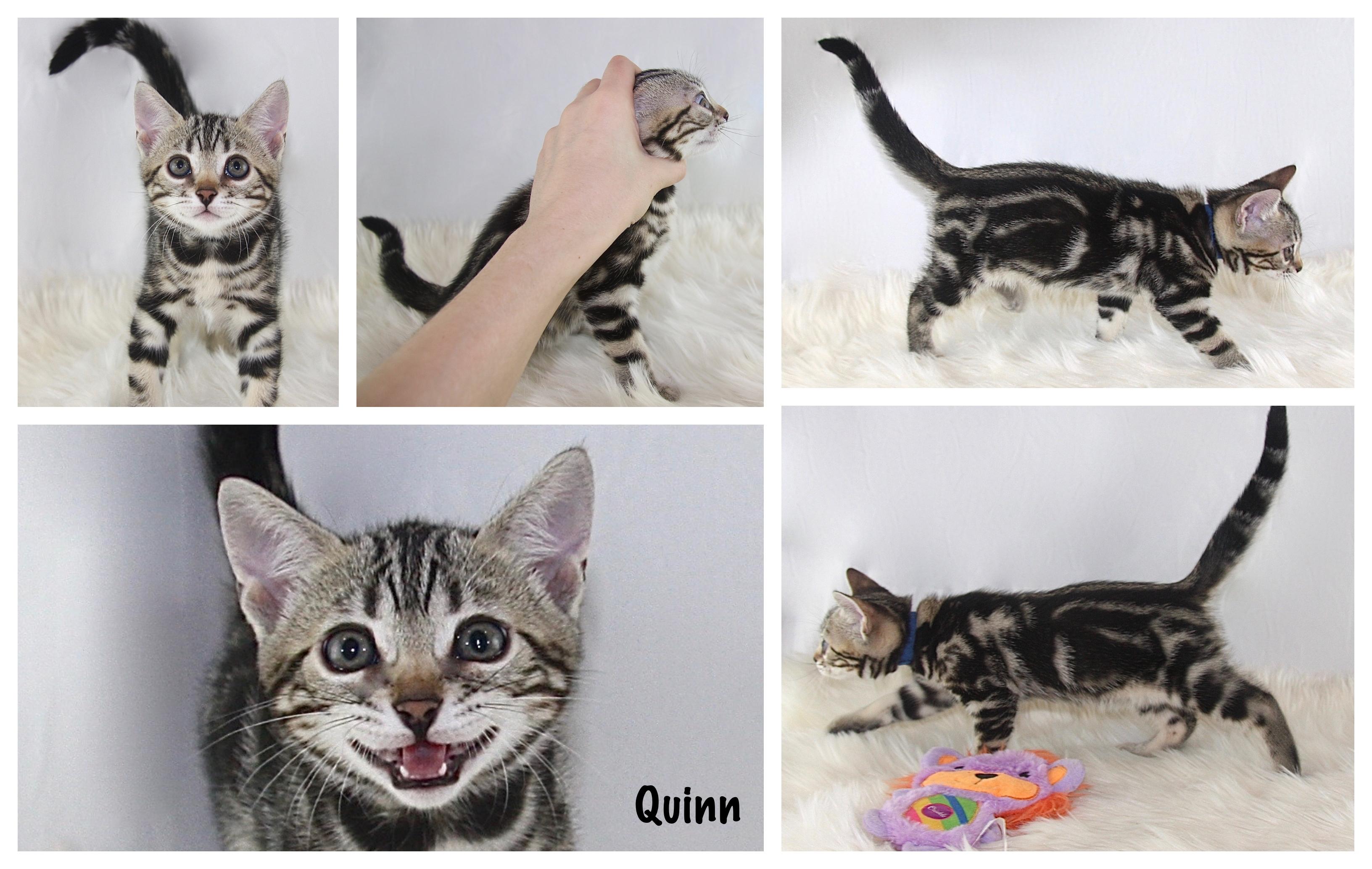 Quinn 8 weeks