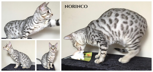 Norinco 27 weeks.jpg