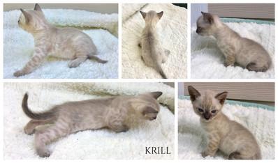 Krill 5 weeks.jpg