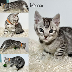 Monroe 7 weeks