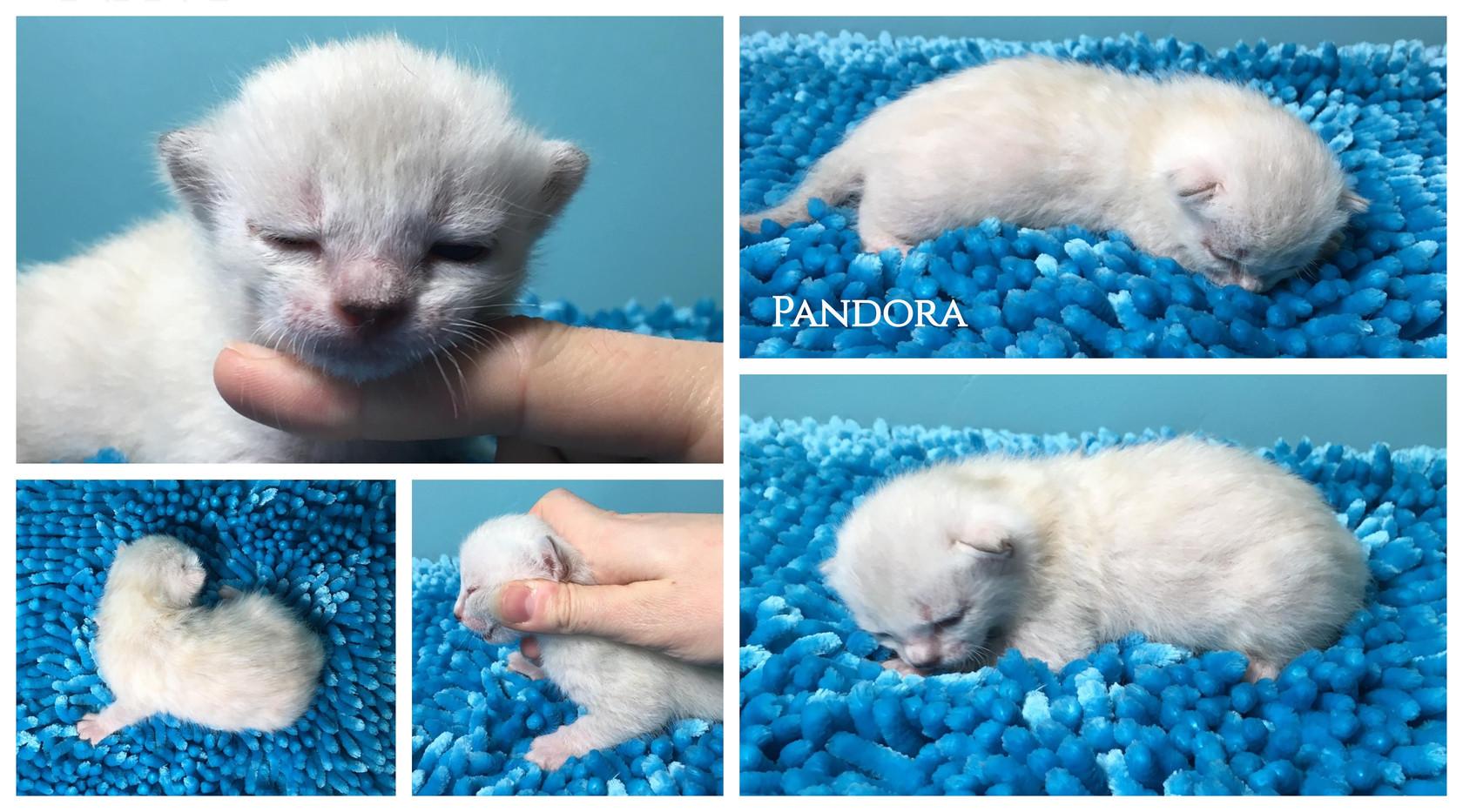 Pandora 2 weeks.jpg