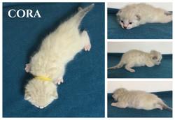 Cora 2 weeks